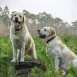 Curso en intervenciones asistidas con animales