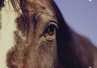 Salida a caballo