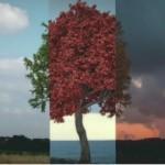 Webinar: El Pacto Verde Europeo: desafíos y oportunidades